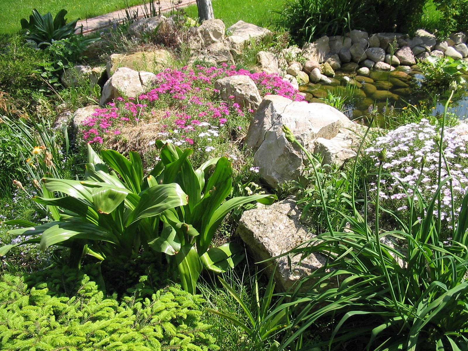 Названия цветов и растения для альпийской горки, рокария и