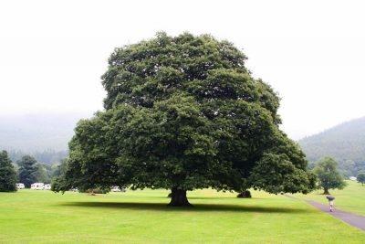 Деревья с доставкой